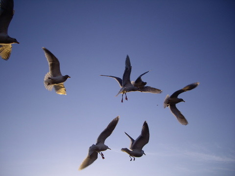 feedingseagulls.jpg